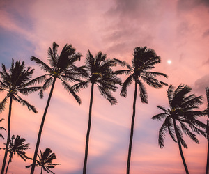 pink, beach, and palm trees image