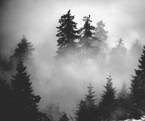 Darkness, forest, and black and white image