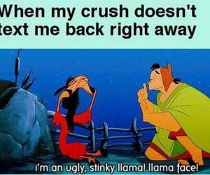 crush, funny, and llama image