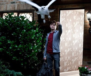 harry potter, hedwig, and edwiges image