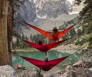 beautiful, forest, and hammock image