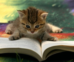 cat, book, and kitten image