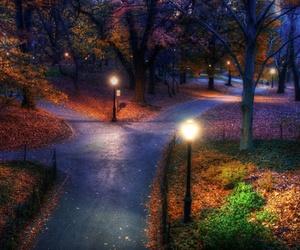 night, tree, and park image