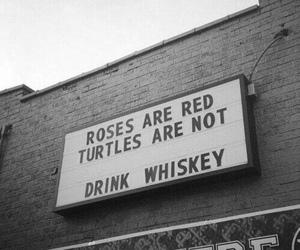 whiskey, grunge, and roses image