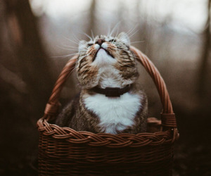 cat, animal, and autumn image