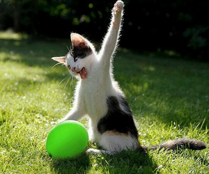 cat, funny, and balloon image