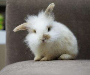 rabbit, adorable, and animal image