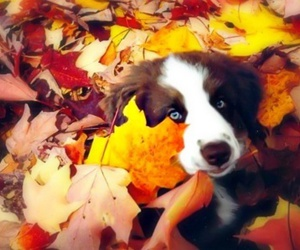 dog, leaves, and cute image