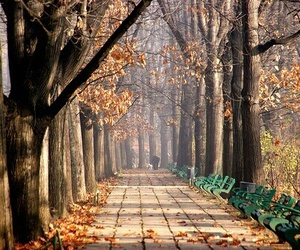 autumn, photography, and fall image
