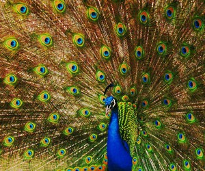 beauty, birds, and colours image