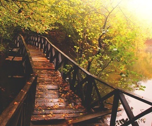nature, autumn, and bridge image