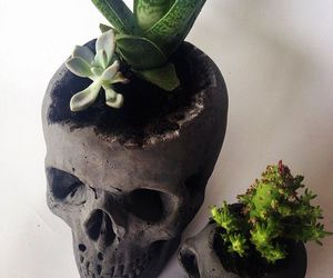 skull, love, and succulent image