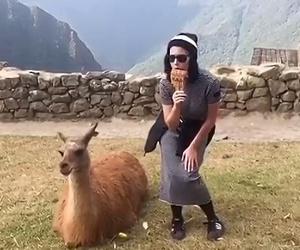 katy perry, lama, and macchu picchu image