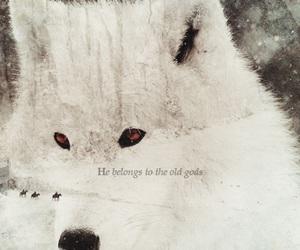 albino, books, and edit image