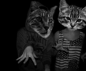 cat, cats, and hoddie image