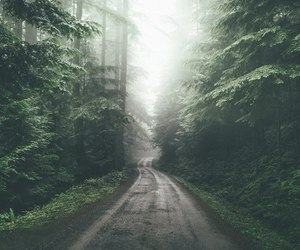 beautiful, forest, and road image