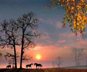horses, tree, and silhouette image