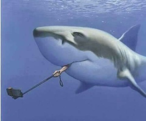 funny, shark, and selfie image
