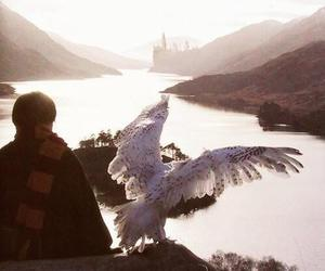 harry potter, hogwarts, and hedwig image