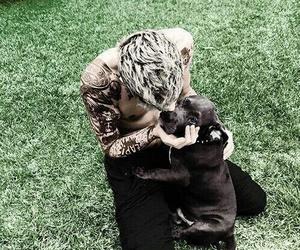 zayn malik, dog, and zayn image