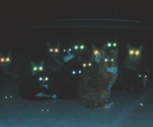 cat, grunge, and eyes image