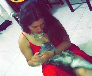 animals, cat, and red image