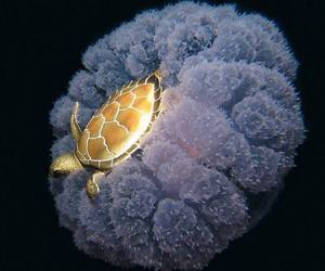 jellyfish, turtle, and sealife image