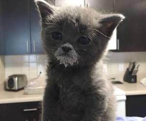 cat, animal, and milk image