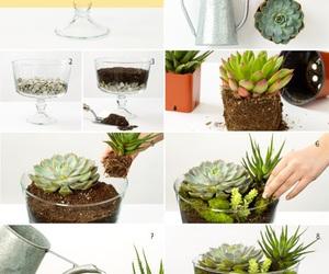 diy, plants, and decoration image