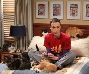 cat, sheldon, and tbbt image