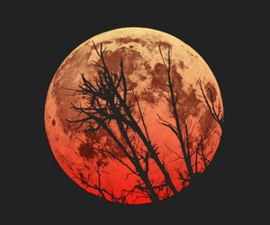 full moon, Halloween, and wolf image