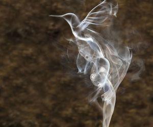 bird and smoke image