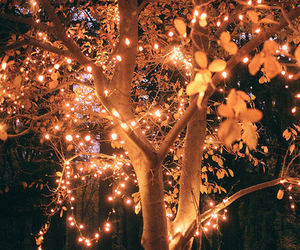 light, tree, and autumn image