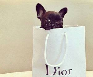 dior, dog, and puppy image