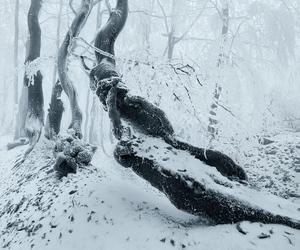 Image by rainstormdragon