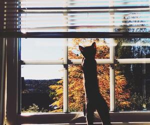 autumn, cat, and cute image