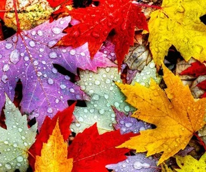 colorful, colors, and leaves image
