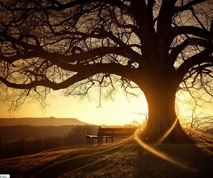 tree, nature, and sunset image