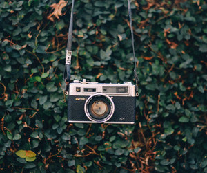 camera, green, and nature image