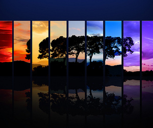 tree, colorful, and nature image