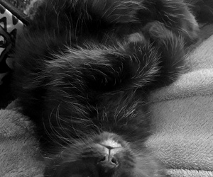 cat cute black image