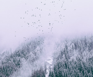 beautiful, landscape, and OMG image