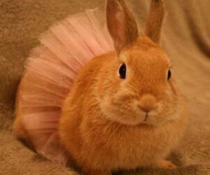 ballet, bunny, and funny image