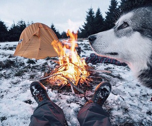 dog, fire, and friend image