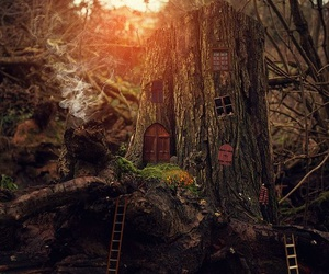 tree, nature, and house image