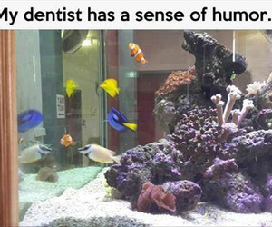 nemo, funny, and dentist image
