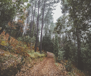 forest, autumn, and places image