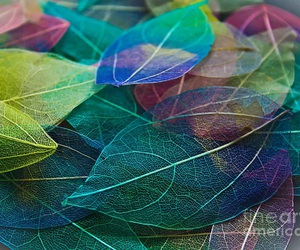 autumn, leaves, and colours image