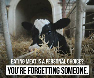 animals, vegan, and meat image