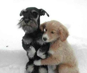 adorable, puppies, and in the snow image